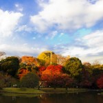 Koishikawa Korakuen Gardens(autumn leaves best now)