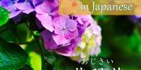 紫陽花の咲く季節 Hydrangea blooming season 某花要開的季節